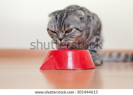 Cat sitting behind the bowl and drinking water. - stock photo