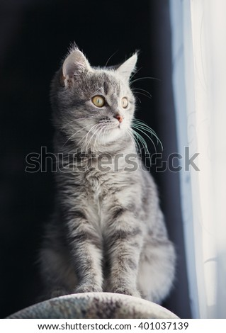 cat sitting by the window