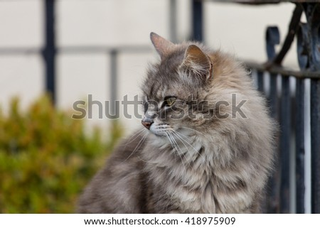 Cat, sitting cat on a bench with fence background. cute funny cat close up, young playful cat , domestic cat, relaxing cat, cat resting, elegant cat - stock photo