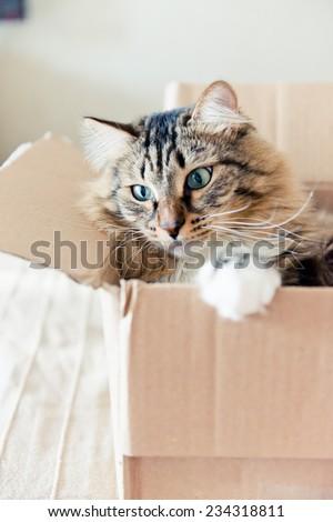 Cat sitting in a cardboard box  - stock photo