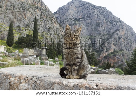 Cat sitting in ancient column of the Temple of Apollo in Delphi Greece