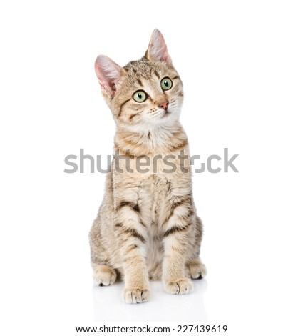 cat sitting in front and looking away. isolated on white background - stock photo