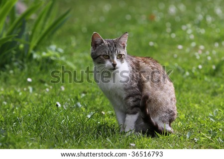 cat sitting in green springs grass