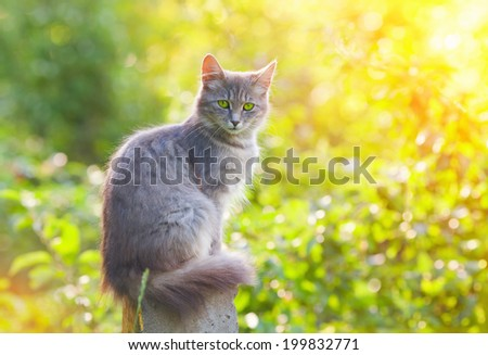 Cat sitting in the garden - stock photo