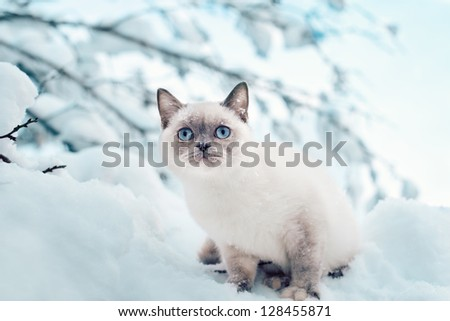 Cat sitting in the snow - stock photo