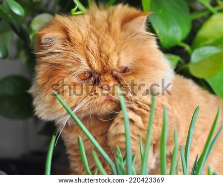 cat sitting near green onions - stock photo
