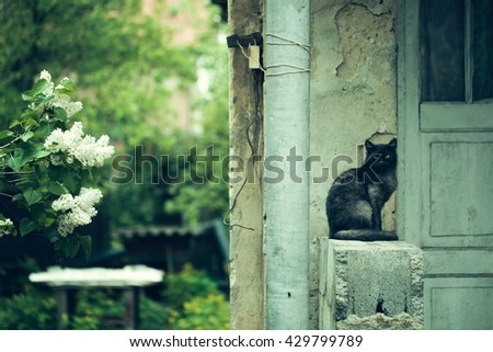 Cat sitting near old house on stony parapeth outdoor and lilac tree blooming with white flowers and lush green leaves - stock photo