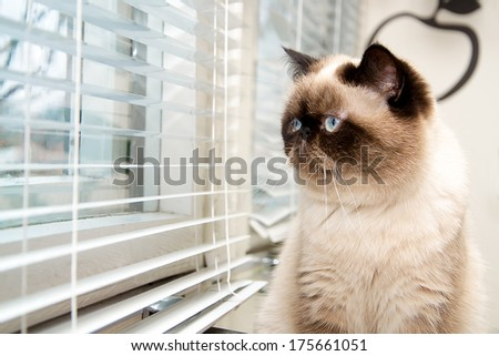 Cat sitting near window blinds - stock photo