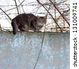 cat sitting on a concrete fence of barbed wire - stock photo