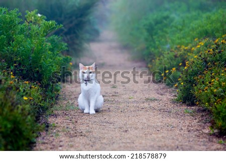 cat sitting on a footpath - stock photo