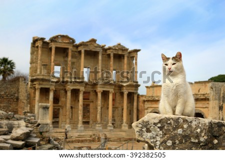 Cat sitting on a pillar in the Ancient City of Ephesus With Celsus  Library in the background - stock photo