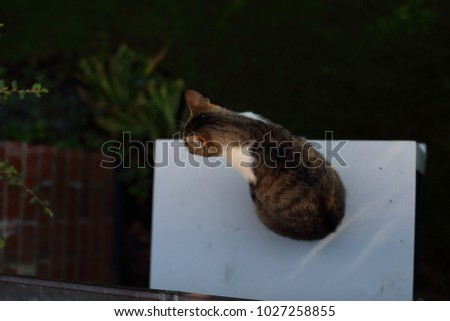 Cat sitting on a white box