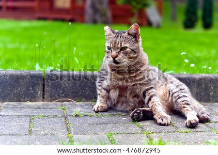 Cat sitting on paved walk outdoors.