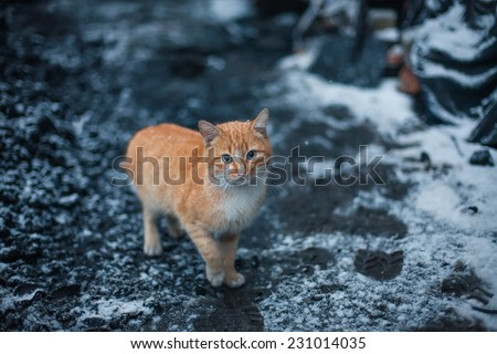 Cat sitting on snow and looks. winter photo. - stock photo
