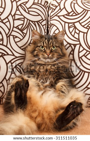 cat sitting on the couch - stock photo