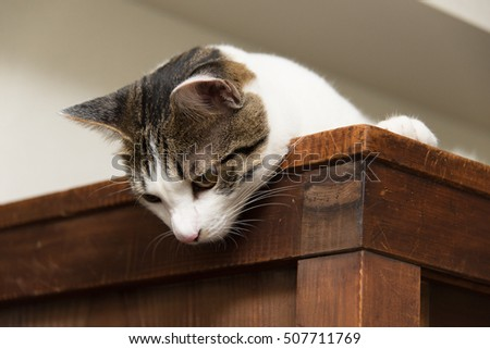 Cat sitting on the cupboard and looking down
