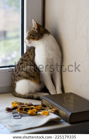 Cat sitting on the window sill and looks out the window, close the book, thread, canvas - stock photo
