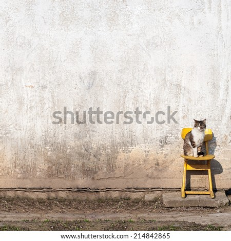 cat sitting on the yellow  chair near the wall - stock photo