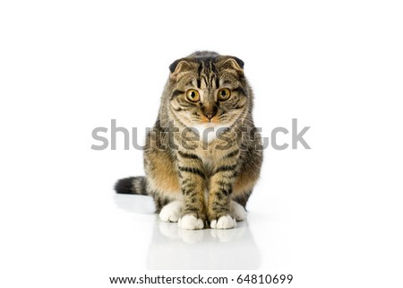 Cat sitting on white isolated