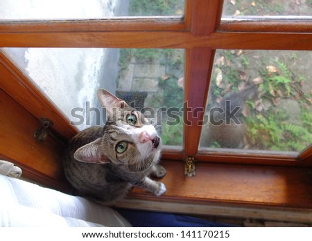 Cat sitting on windowsill at home. - stock photo