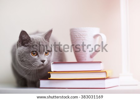Cat sitting on wooden shelf with stack of books closeup - stock photo