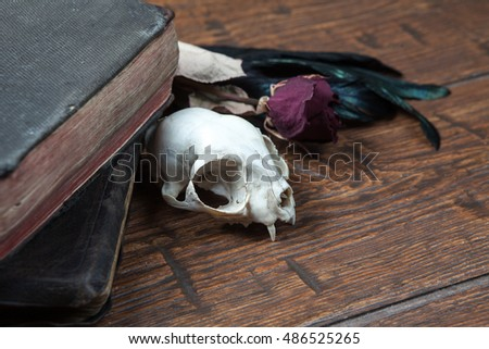 Cat skull, old books, dry rose and crow quill on old wooden desk. Vintage witchcraft still life.