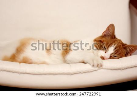 cat sleep - stock photo
