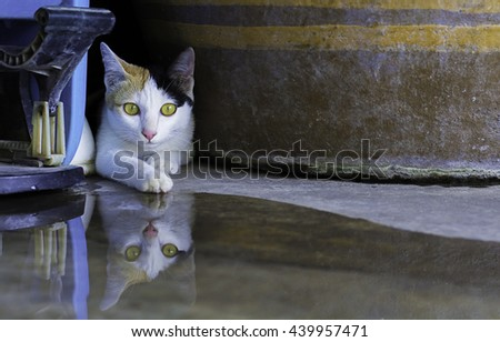 cat sleep see eye contact and water reflection  - stock photo