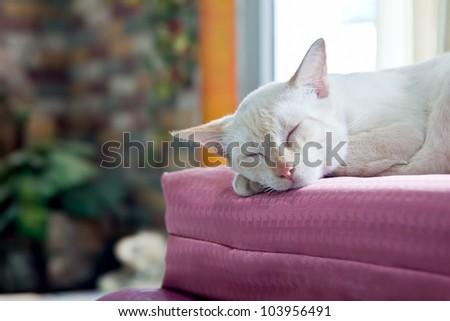cat sleep soft focus - stock photo