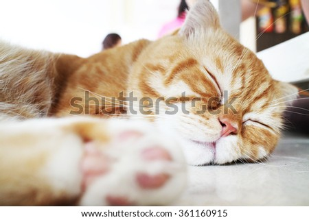 Cat sleeping - stock photo
