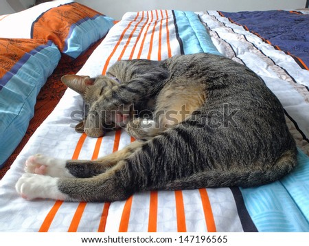 Cat sleeping covering eyes on bed at home.