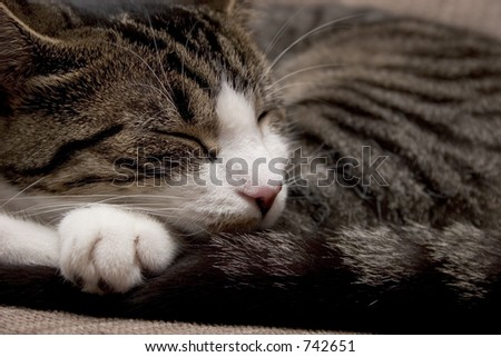 Cat sleeping curled up - stock photo