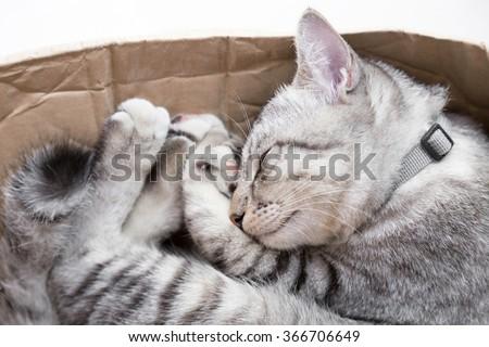 cat sleeping in a cardboard box - stock photo