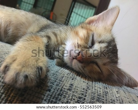 Cat sleeping in the cloth sofa