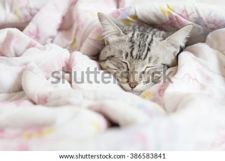cat sleeping in the pink floral blanket, selective focus - stock photo