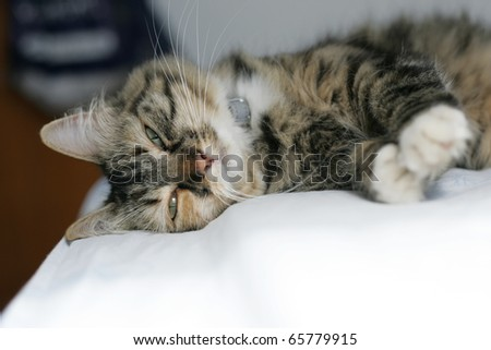 cat sleeping on a bed - stock photo