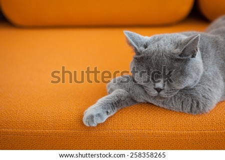 Cat sleeping on a couch
