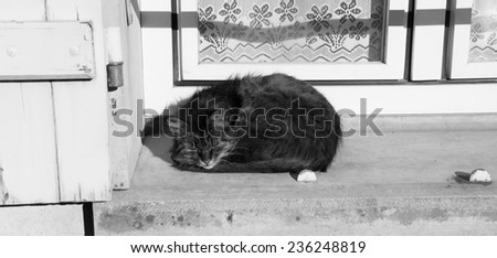 Cat sleeping on a windowsill of an old rural house with lace curtain decorating the window. Aged photo. Black and white. - stock photo