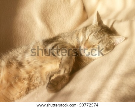 Cat sleeping on bed. Photo taken with soft filter. - stock photo