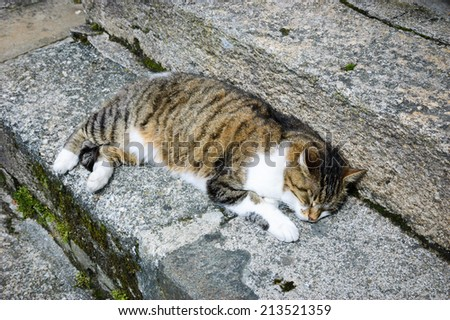 Cat sleeping on old mossy  stone stair in medieval town of Dinan. Brittany, France. - stock photo