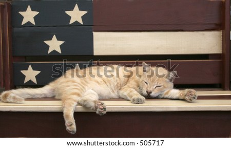 cat sleeping on patriotic bench - stock photo