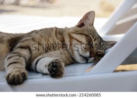 cat sleeping on the lounge - stock photo