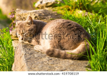 Cat sleeping peacefully in the sun on a stone in the garden viewed from its tail with focus on the head - stock photo