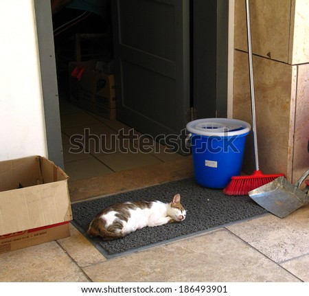 Cat sleeping with cleaning things near museum doors in Greece - stock photo