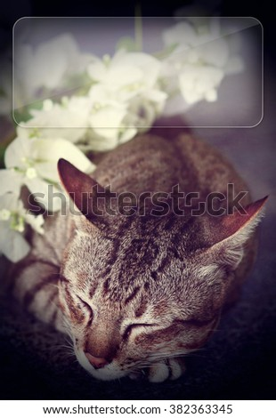 cat sleeping with white flowers - copy space - stock photo