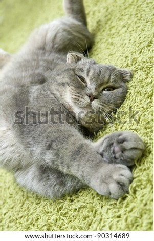 cat sleeps on the green carpet at home - stock photo
