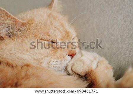 cat cat vines