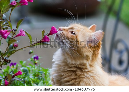 Cat smelling flowers - stock photo