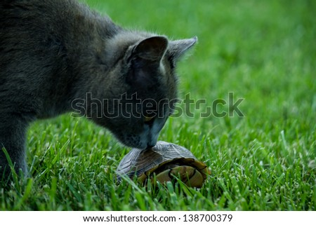 cat smelling turtle