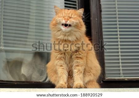 cat smiles on the balcony - stock photo